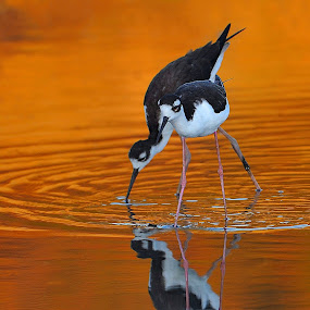 Lovers by Dan Pham - Animals Birds