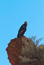 Photo: Zion Angels Landing Hike 38
