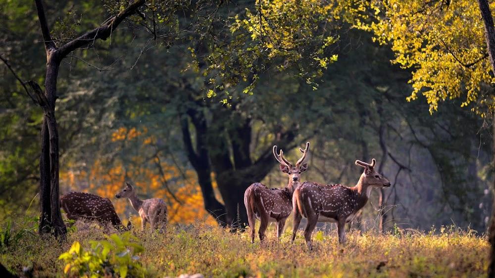 Kanha_National_Park