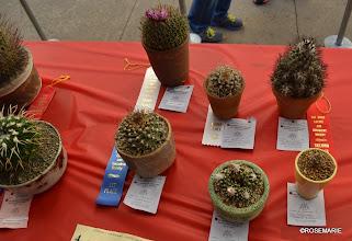 Photo: Gymnocactus, Tubinicarpus, Stenocactus