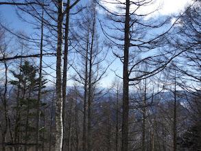 樹間から展望