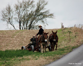 Photo: (Year 3) Day 136 - Ploughing, Amish Style  (Lancaster County, Pennsylvania, USA)