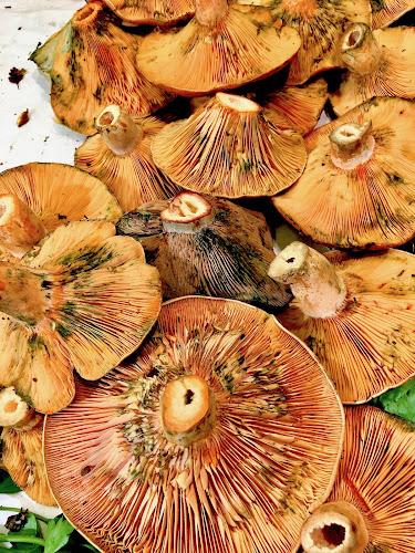 by Timothy Carney - Food & Drink Fruits & Vegetables ( market, barcelona, mushrooms )