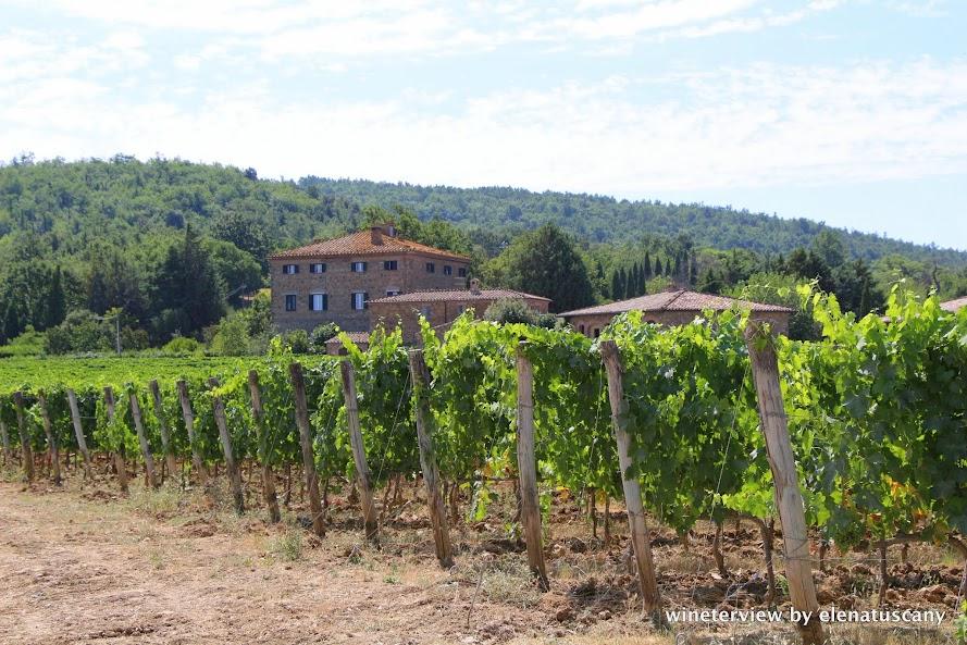 le potazzine, le potazzine montalcino, montalcino wine, cantina, winery, montalcino winery, winery tuscany