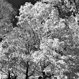 by Tim Hall - Black & White Landscapes