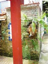 Photo: Samambaias caem de vasos de xaxim presos a molduras naturais de madeira. http://celiamartins.blogspot.com/