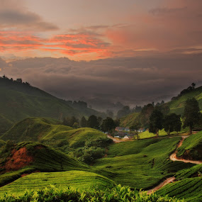 200806290657 Cameron Highland by Steven De Siow - Landscapes Mountains & Hills ( mountains, cameron highland, malaysia, landscape, tea farm, , Earth, Light, Landscapes, Views, relax, tranquil, relaxing, tranquility )