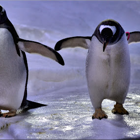 penguins by Nic Scott - Animals Other ( penguin,  )