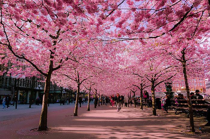 Stockholm, Sweden, đường hoa
