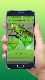 Suara Belalang Kecek Master Terbaru Offline - náhled