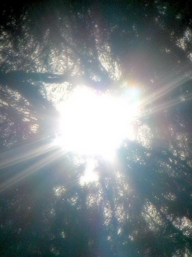 IL SOLE SOPRA GLI ABETI di PhotoLoris