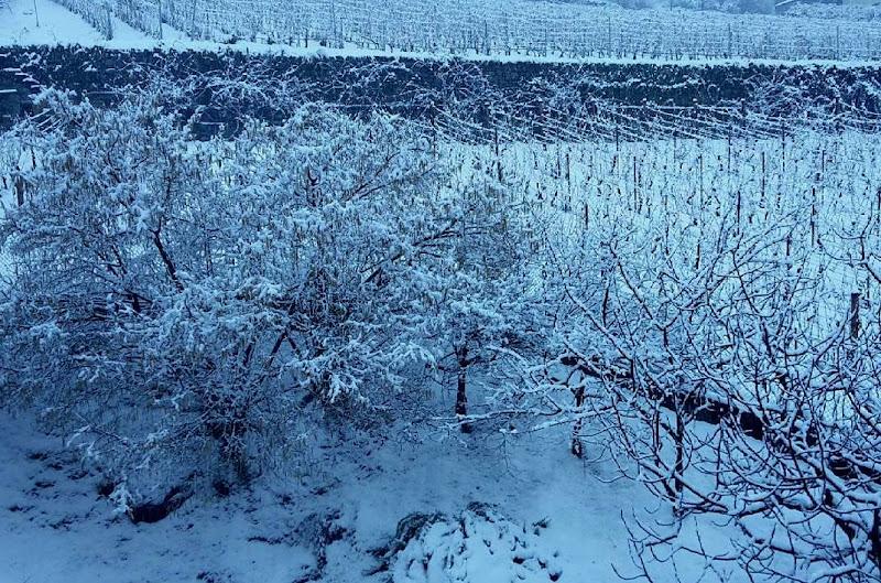 white...quiet..it is the snow di simotuttergreen