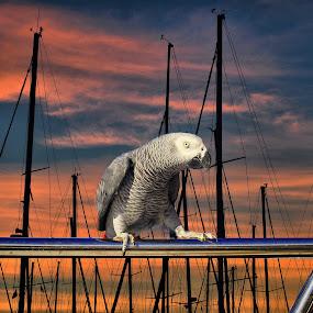 by Dado Barić - Animals Birds
