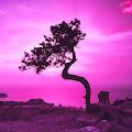 Pink Sky Live Wallpaper APK