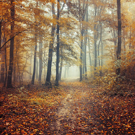 Autumn Walk C. by Zsolt Zsigmond - Landscapes Forests ( forest, sunrise, nature, woods, yellow, beauty in nature, trees, mist, morning, orange, path, trail, foliage, fall, leaves, light, autumn, landscape, fog )