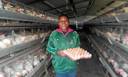 Young female farmer Mbalentle Sipengane, whose farm  produces 4000 eggs, arranges the eggs produced by  11000 hens in  Vanderbijlpark, Vaal./Silusapho Nyanda