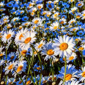 by DE Grabenstein - Flowers Flowers in the Wild