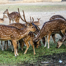 by Mohsin Raza - Animals Other (  )