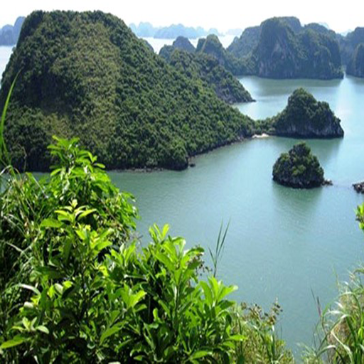 QuangNinh Halan