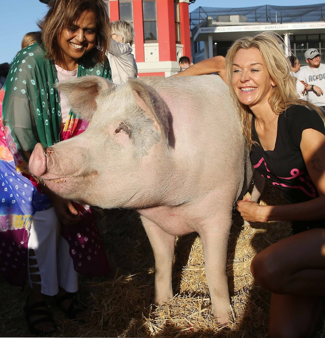 Pigcasso with her owner Joanne Lefson' who runs the Franschhoek Farm Sanctuary, and Professor Uma Mesthrie, a patron of the sanctuary.
