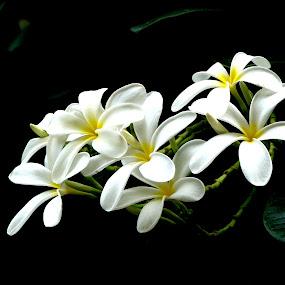 by Amalendu Saha - Flowers Flower Arangements