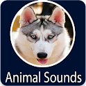 Animals Sound icon