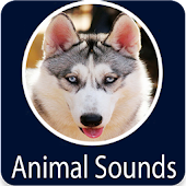 Animals Sound