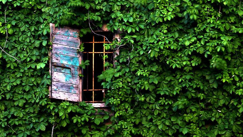 Verde nel verde. di michelangelo_florilegio