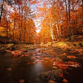 Autumn Forest by Filip De Vos - Landscapes Forests
