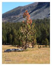 Photo: Eastern Sierras-20120717-698