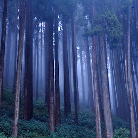 The Misty Forest by Debdatta Chakraborty - Landscapes Forests ( pwcotherworldly )