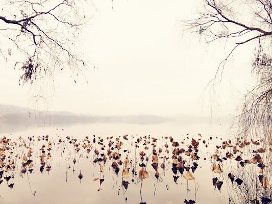 Ninfee d'inverno al lago di Gilbert54