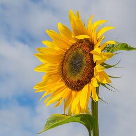 by Anngunn Dårflot - Flowers Single Flower