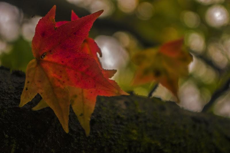 Foglie d'autunno di Marck Nibi