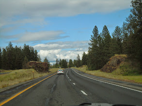 Photo: Idaho and the trees are coming back