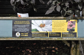Photo: Help save the bees - RHS gardens Wisley