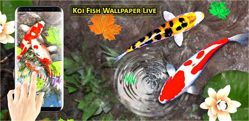 3d koi fish wallpaper hd 3d fish live wallpapers app apk free