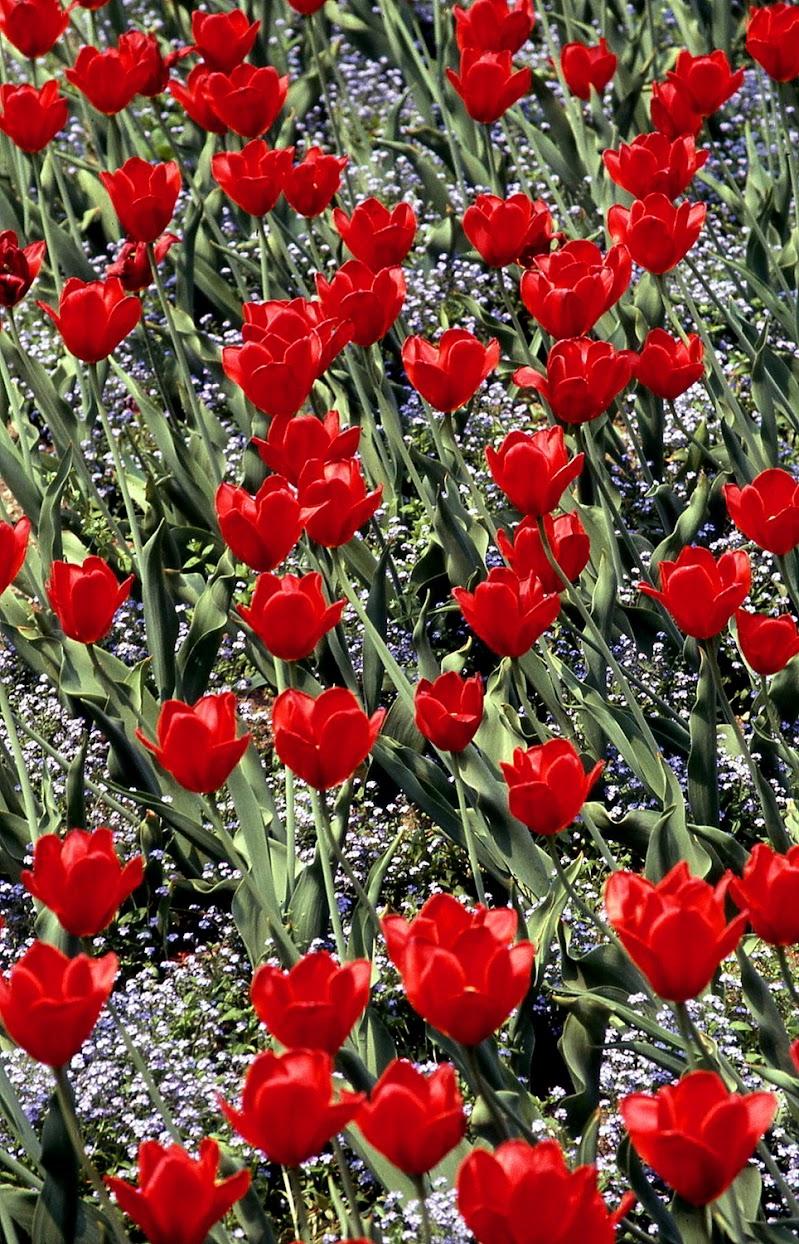 Red and green di Toninola