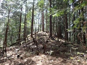 林道から10分ほどで手前のピーク