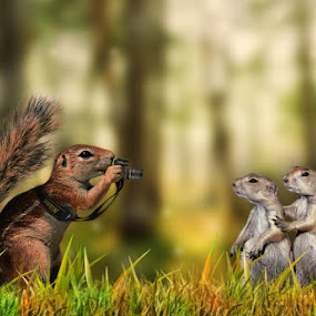 by Caras Ionut - Digital Art Things ( picture, grass, green, family, forest, nikon, squirrel )
