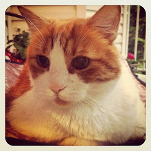 Photo: Mr. Tom in the balcony #intercer #pet #pets #petsofinstagram #catlovers #catsofinstagram #cat #cats #orange #white #eyes #beautiful #nice #fur - via Instagram, http://ift.tt/1mh9W1o