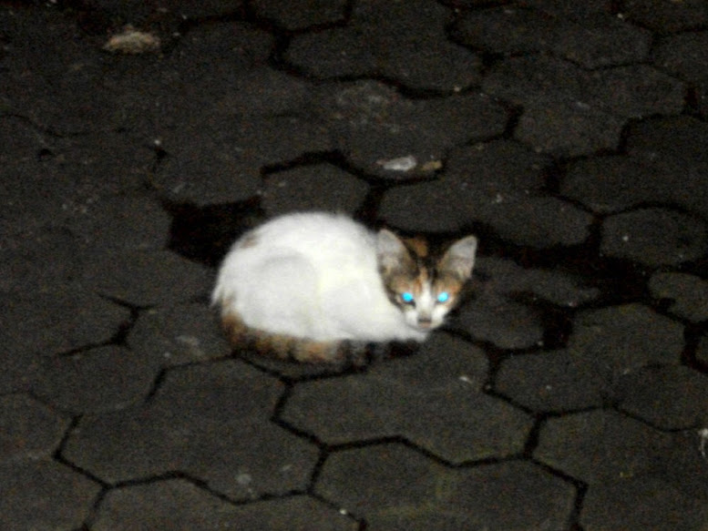 Anak Pus, kucing yang kalem dan mau bergaul dengan manusia