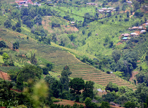 Photo: Day 339 -  Slopes of  Mae Salong Valley  #2