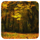 Autumn Live Wallpaper by Amazing Live Wallpaperss Apk