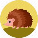 Hedgehog Wallpapers HD Cute Hedgehogs New Tab Icon