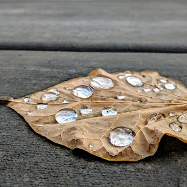 Leaf Droplets by Peter Dewey - Nature Up Close Leaves & Grasses ( cement, fall, wet, cold, leaf, water droplets )