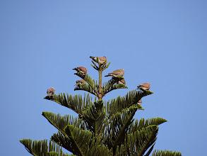 Photo: 大龍峒保安宮迎風群立的紅鳩