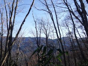 枝越しに安倍川東山稜を望む