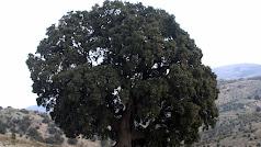 La Peana, 1.300 años la contemplan y hoy está amenazada