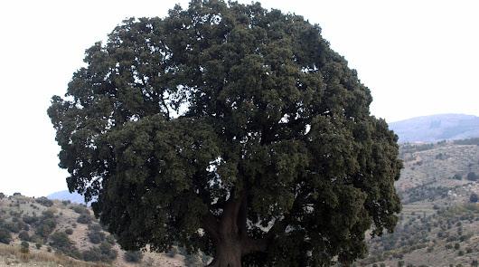 Los árboles que nos robaron a los almerienses